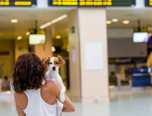Tips for Flying With a Dog – A Guide For Air Travelers