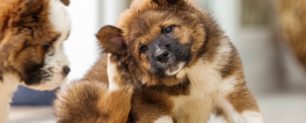 How to Relief Itchy Skin in Dogs and Cats