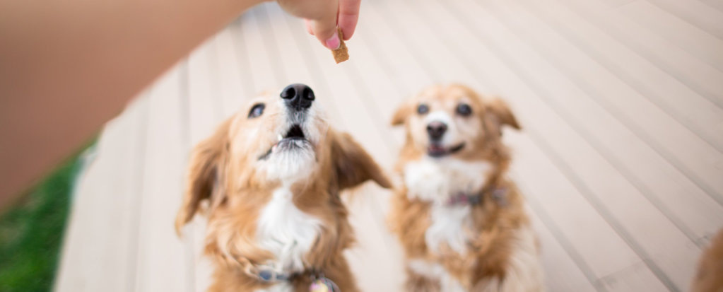 How to Give Medicine to Your Dog