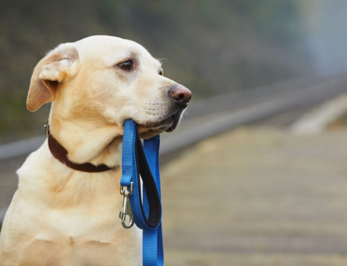 Helping a Dog Who Suffers from Separation Anxiety
